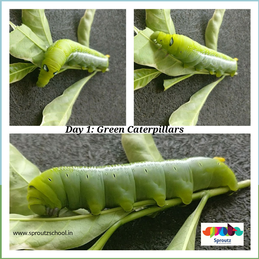 caterpillar_2_original