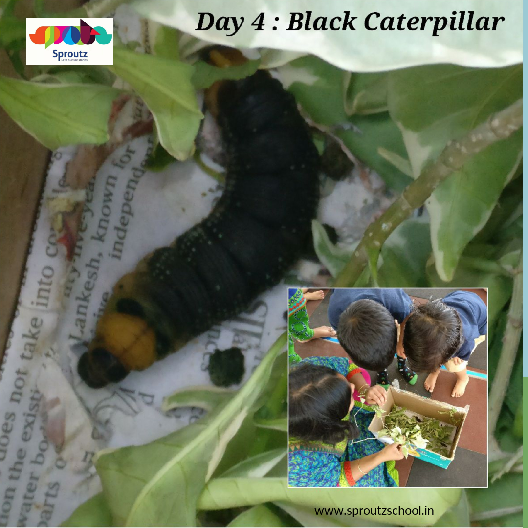 caterpillar_3_original