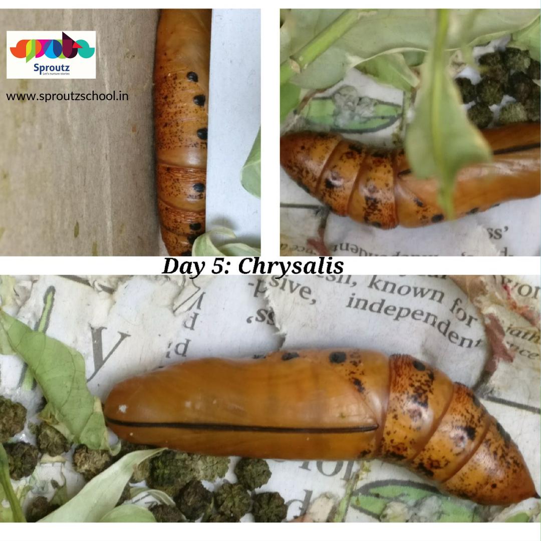 caterpillar_4_original